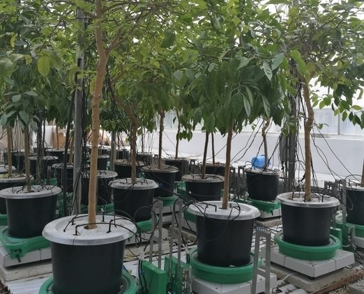 Home - Plant-DiTech